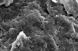 bacterias Geobacter sulfurreducens