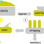 Residuos de la producción de biogás permiten producir fertilizante ecológico a bajo coste