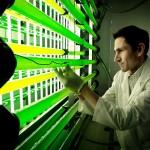 Iberdrola y Ainia crean un revolucionario sistema de captura de CO2 y cultivo de microalgas