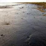 Proponen un nuevo método para evaluar los riesgos en suelos contaminados por hidrocarburos
