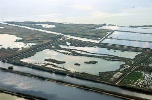 Las lagunas someras del Tancat de la Pipa colaboran en la recuperación de la calidad del agua de l'Albufera