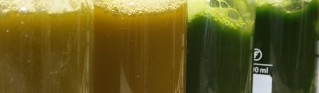 NEIKER-Tecnalia convierte residuos agroalimentarios en aceite a través del cultivo de microalgas