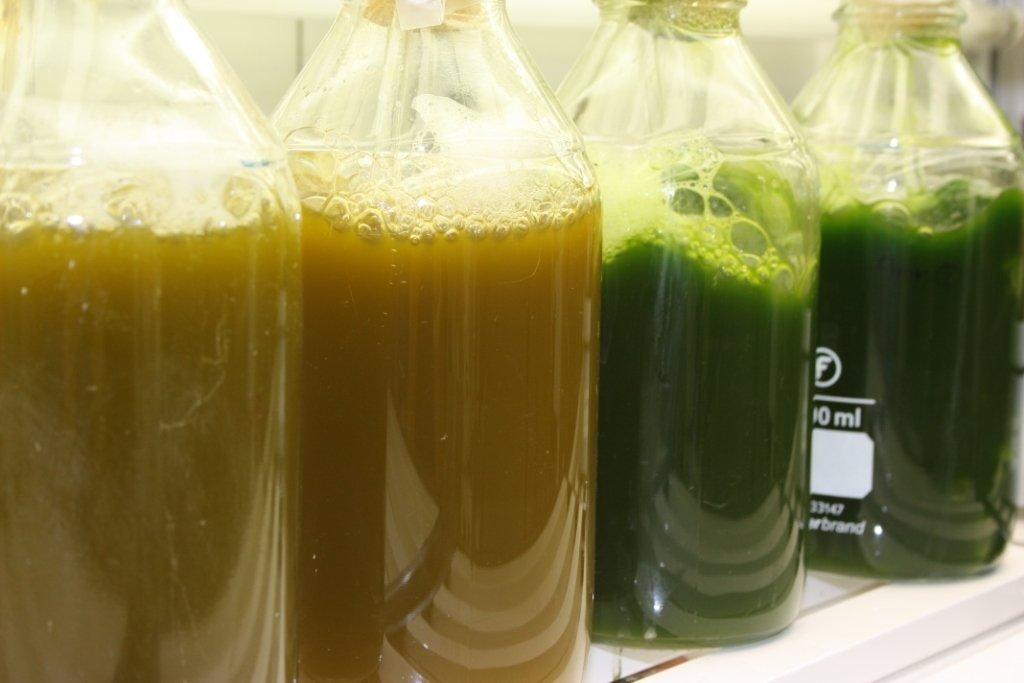 Cultivo Microalgas - Neiker Teknalia