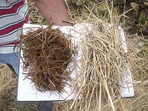 aprovechamiento de los residuos del cultivo de arroz