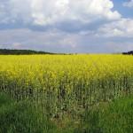 La producción mundial de biocombustibles cae por primera vez desde el año 2000