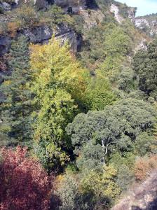 La disponibilidad de nutrientes determina la capacidad de capturar carbono de los bosques