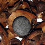 Obtienen carbón activado a partir de cascarilla de cacao