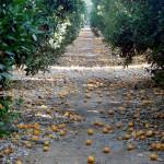 Tecnología 'a la carta' para valorizar residuos agroalimentarios