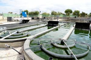 cultivo y valorización de microalgas