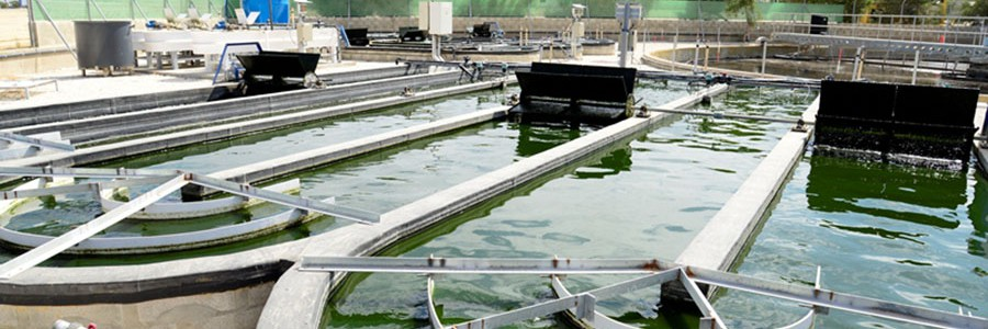 Aprovechamiento de microalgas para una nueva biociudad autosuficiente y sostenible
