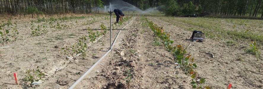 Proyecto para producir biomasa a la carta