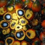 Residuos de almendra de palma para crear filtros que purifican agua y aire