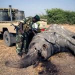 Los delitos contra el medio ambiente, un negocio de 156.000 millones de euros anuales