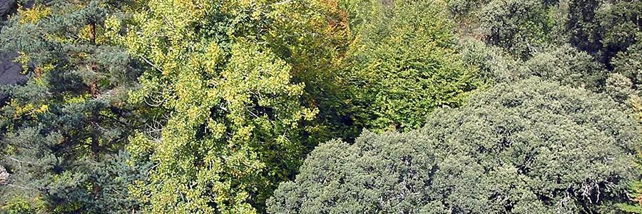 Un proyecto asturiano desarrollará una innovadora planta de cogeneración a partir de residuos forestales