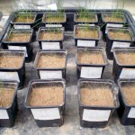 Reutilizan aguas residuales y lodos para recuperar suelos degradados