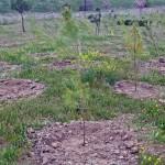 Mil árboles crecen ya en el Tercer Bosque SIGAUS