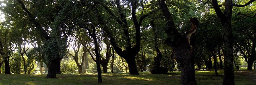 Árboles que producen más biomasa gracias a la biotecnología