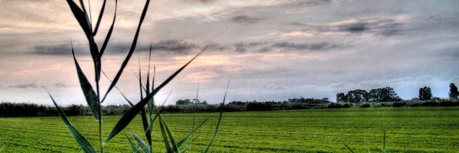 La Albufera de Valencia tendrá la primera planta para generar energía y bionutrientes a partir de residuos del cultivo de arroz
