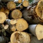 Presentan un trabajo de 15 años de investigación sobre el aprovechamiento de la biomasa