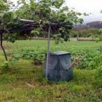 Más de 3.000 familias gallegas ya hacen compost con sus propios residuos