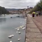 Malas prácticas en la limpieza urbana de Plentzia (Bizkaia)