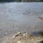 Una aplicación móvil permite evaluar el estado ecológico de los ríos gracias a la colaboración ciudadana