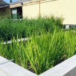 Desarrollan un innovador sistema de fitodepuración de aguas residuales de bajo coste