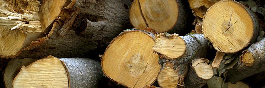 El Ayuntamiento de Cuenca impulsa la construcción de una planta de biomasa a partir de subproductos madereros