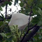 Europa, a un paso de eliminar las bolsas de plástico más contaminantes