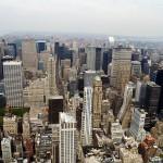 Los insectos de Nueva York eliminan una tonelada de residuos al año