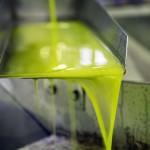 Microalgas para reciclar las aguas residuales de la producción de aceite de oliva