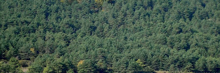 Siete municipios valencianos producirán biomasa con cultivos energéticos