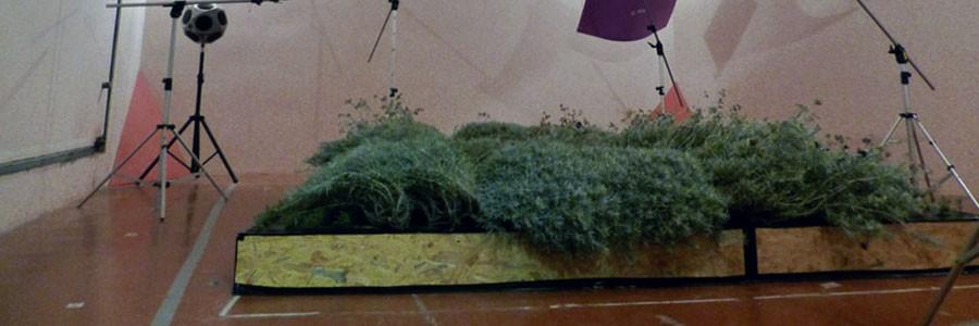 Paredes vegetales contra la contaminación acústica