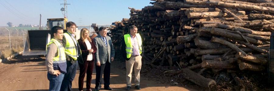 El sector andaluz de biomasa energética ha creado mil nuevos empleos