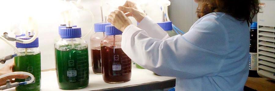 Un nuevo método reduce el coste energético de la producción de biodiésel con microalgas