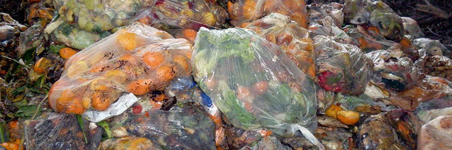 Investigan nuevas vías de valorización de residuos