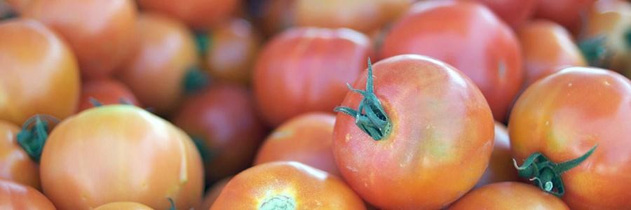 Investigan el uso de residuos de tomate en la fabricación de coches