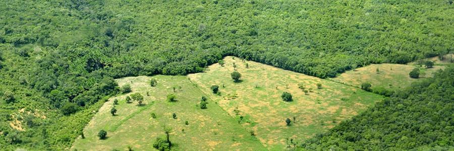 La industria brasileña del acero duplica sus emisiones de CO2 al sustituir el carbón mineral por vegetal