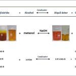 Obtienen biodiésel de mayor calidad mezclando aceites de fritura, pescado y palma