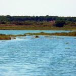 Una nueva microalga descubierta en Marismas del Odiel podría producir biodiésel