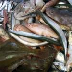 Jornada en Santiago de Compostela sobre gestión de residuos y subproductos animales