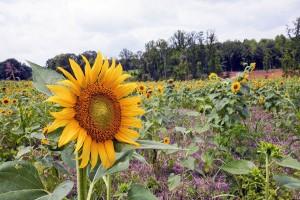 los ecologistas creen que la reforma sobre agrocombustibles propuesta al Parlamento Europeo es insuficiente
