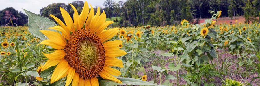 """Los ecologistas consideran """"tibia"""" la reforma sobre agrocombustibles propuesta por la UE"""