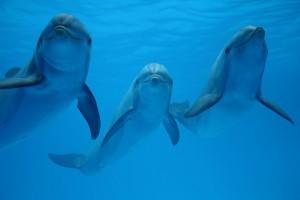 Los retardantes de llama son una amenaza para los delfines del Mediterráneo