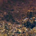 Adjudicado el proyecto de construcción de la incineradora de Asturias