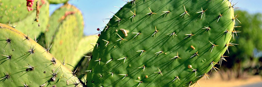 Aprovechan los residuos de los mercados de México DF para generar electricidad