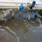 En busca de la mejor biotecnología de depuración de aguas contaminadas con metales