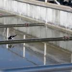 En busca de una tecnología más eficiente para el tratamiento de aguas residuales urbanas