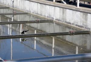 El proyecto 'OptiAnMBR' pretende aplicar la tecnología de reactores anaerobios de memrana al tratamiento de aguas residuales urbanas