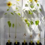 Biocarbón: aprovechar residuos vegetales para mejorar la producción agrícola